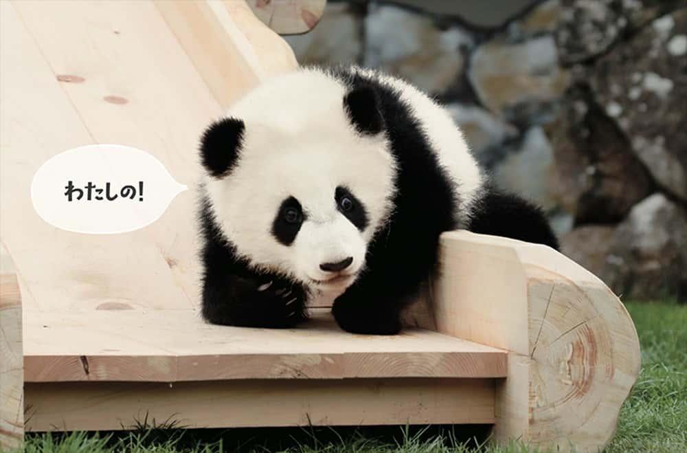 パンダでおぼえる英会話 すべり台