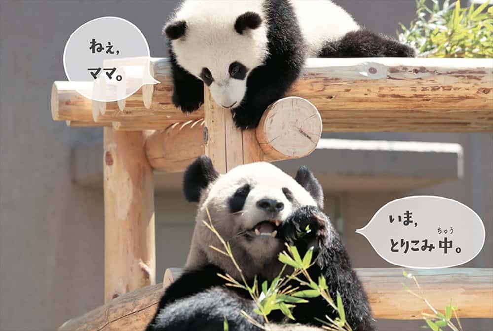 パンダでおぼえる英会話 食事中