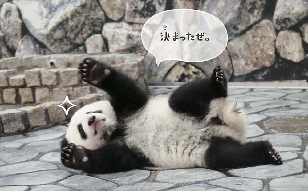 パンダでおぼえる英会話 ダンス