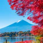 オンライン英会話「ネイティブキャンプ」、オリジナルの「都道府県」教材を続々リリース!
